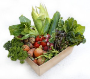 Example of an early autumn veggie box