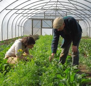 Starter Farmer Claire